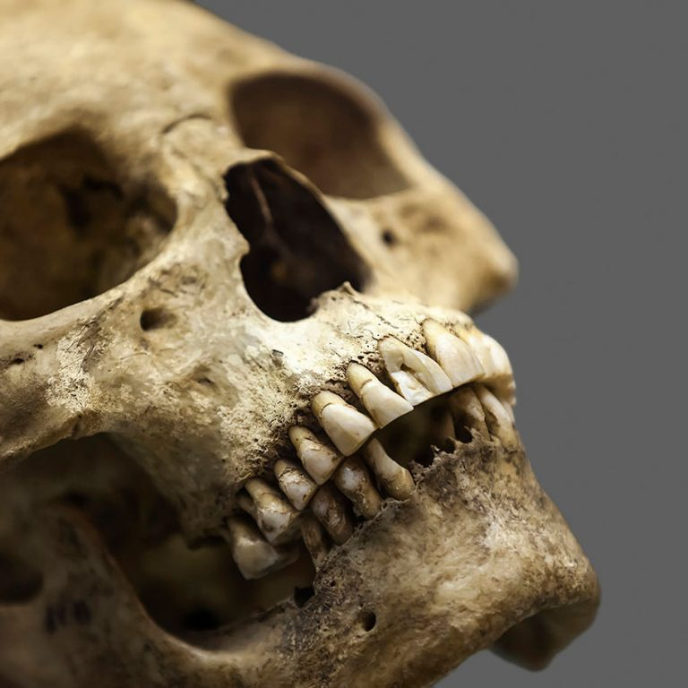 research on human remains