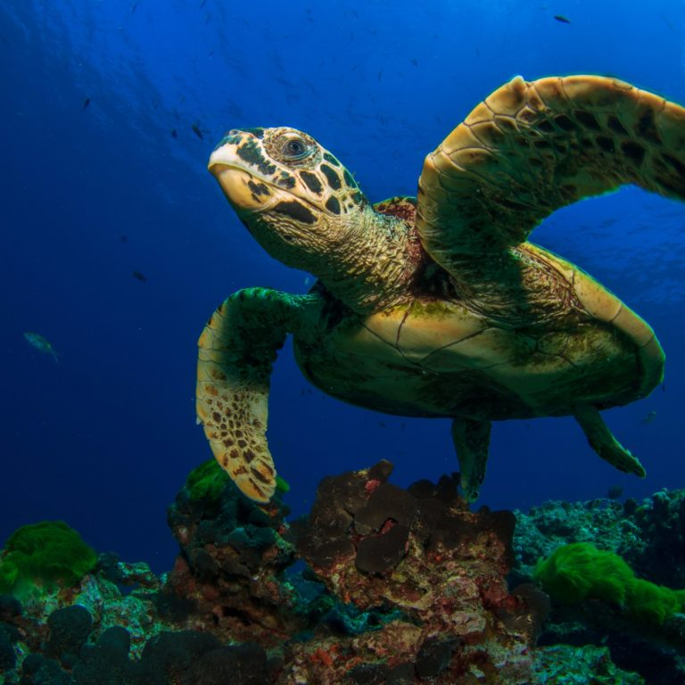 research on sea turtles